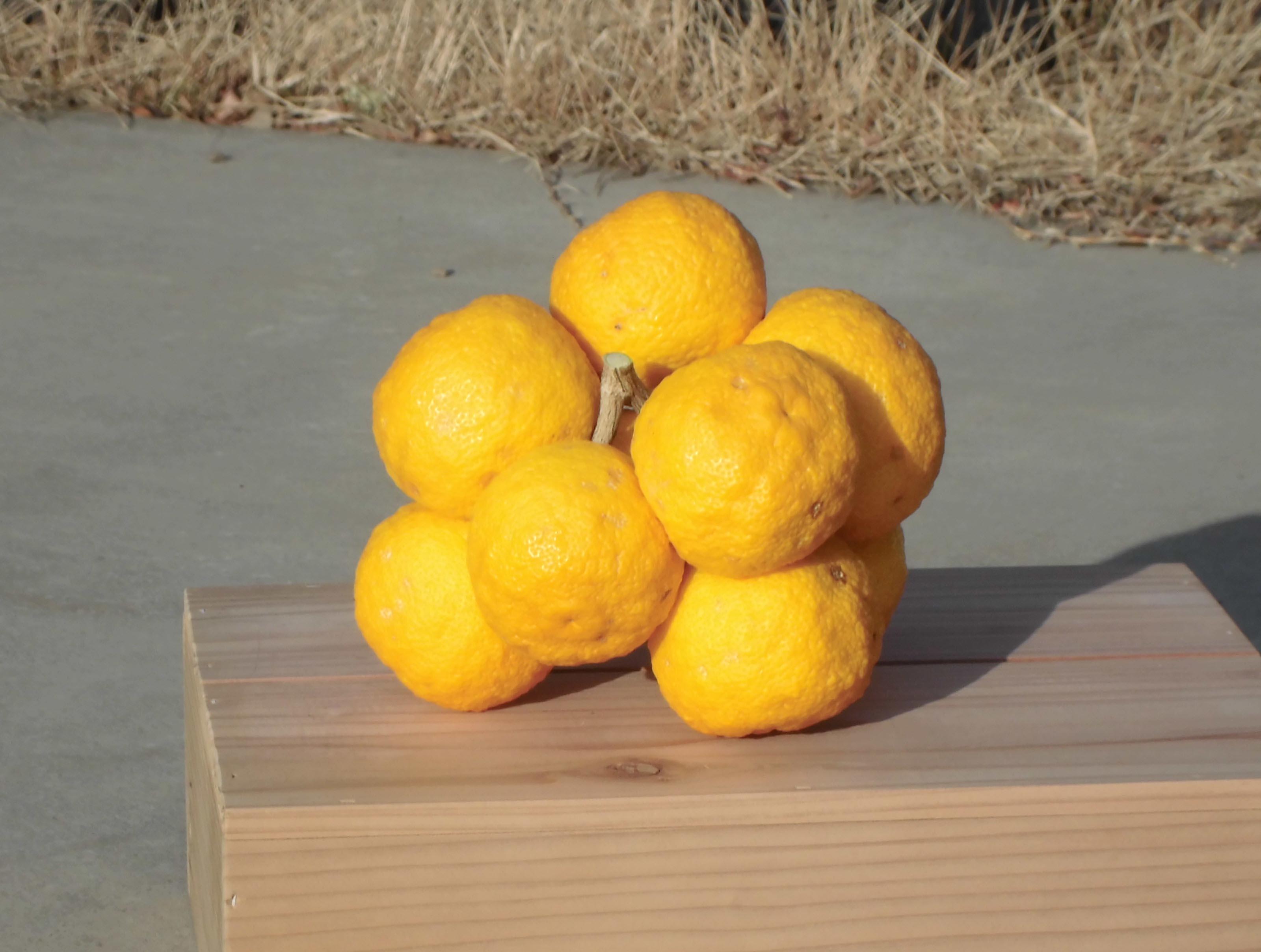 ブドウのような柚子(植水支店)
