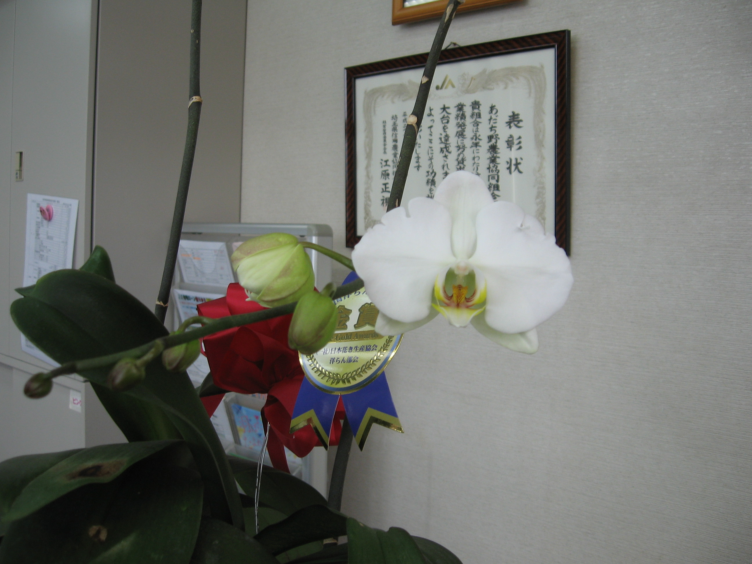 P14左下 候補・通信員(北部融資推進課)・洋蘭が開花!!