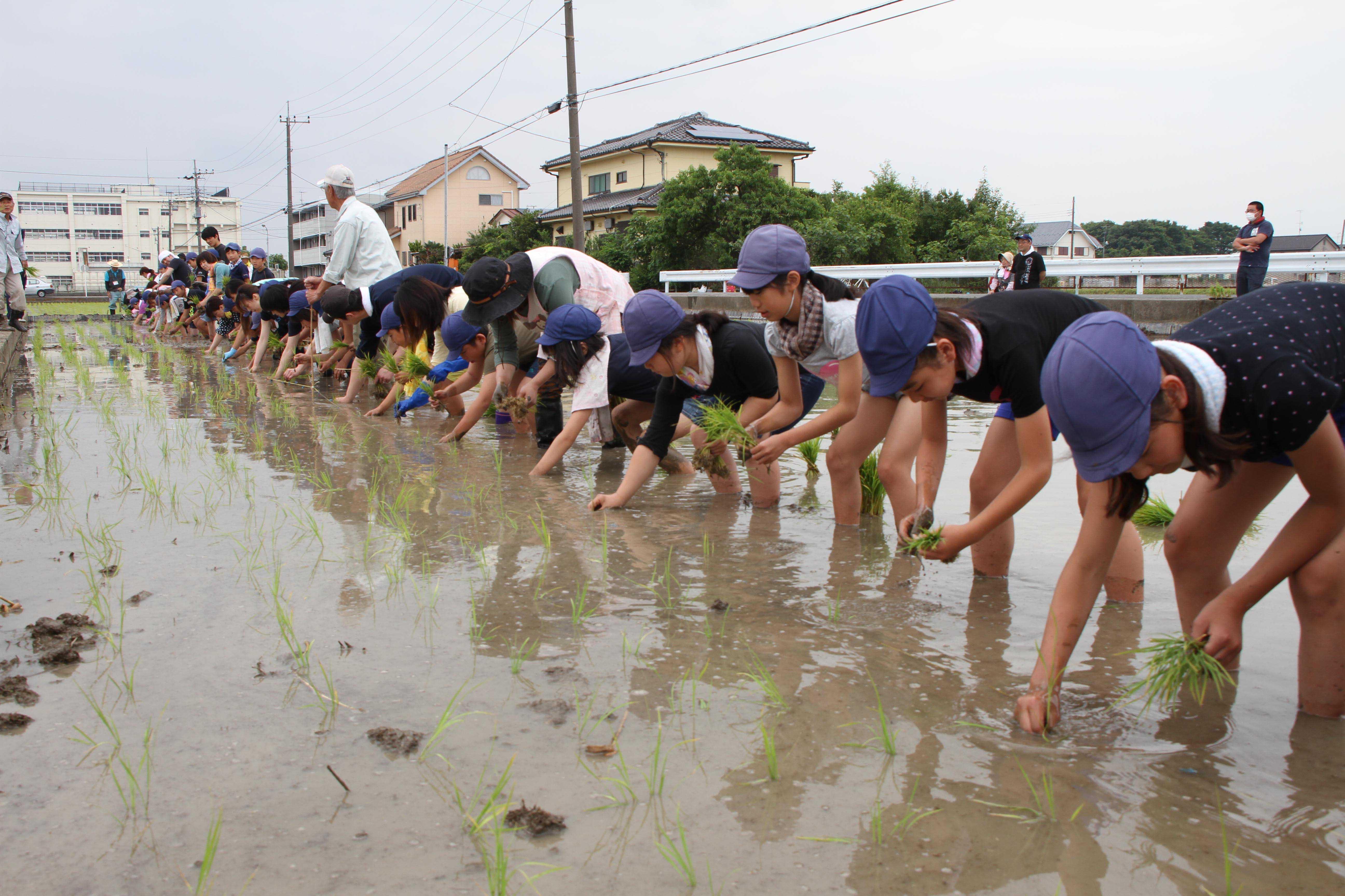鴻巣市立大芦小学校で田植え体験(吹上支店)