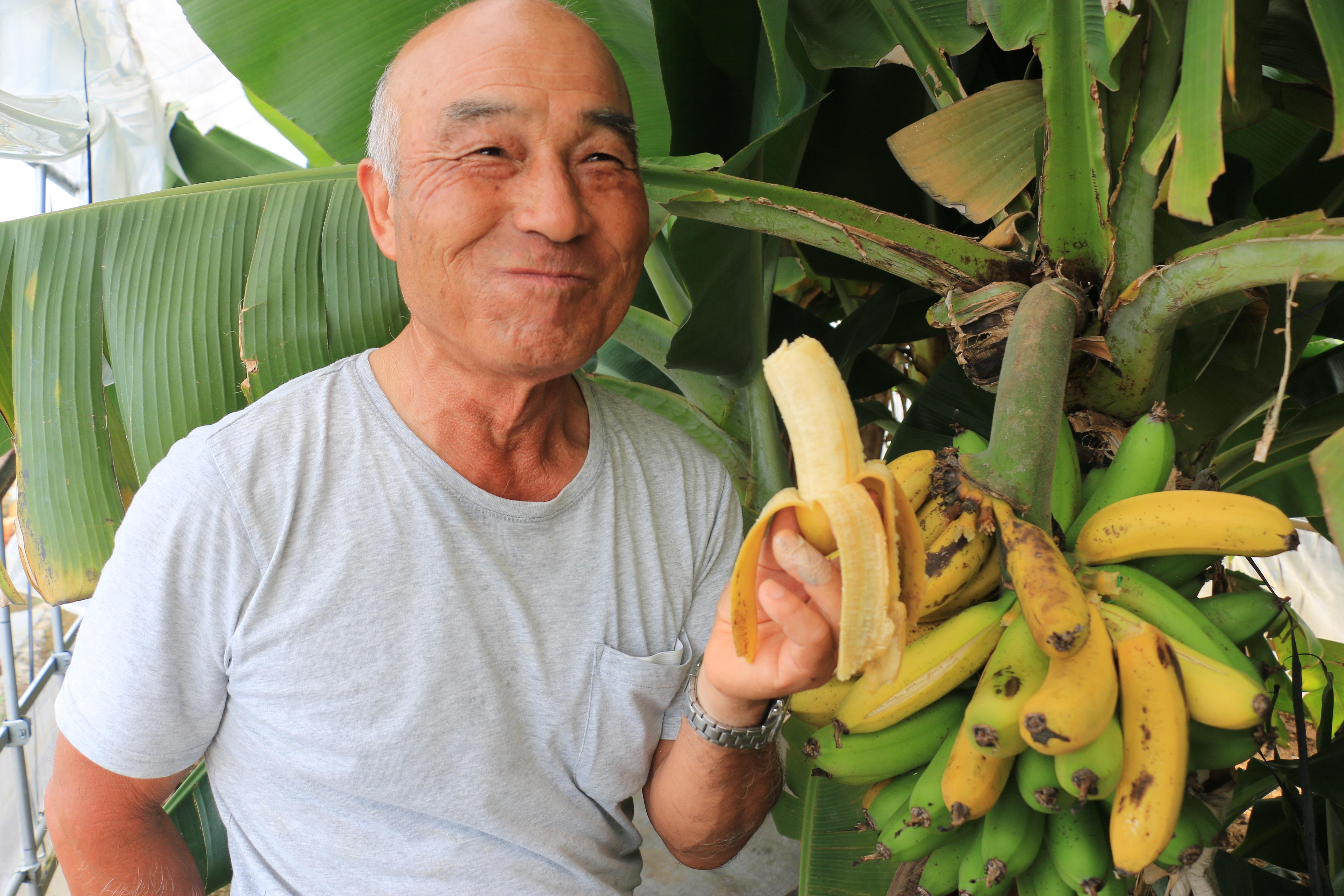 まるで南国! 完熟バナナ(箕田支店:鴻巣市)